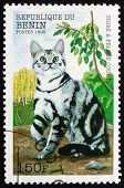 Postage Stamp Benin 1998 Striped Shorthair Cat