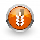 grain orange glossy web icon