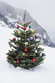 Christmas tree on mountain slope