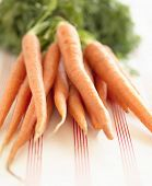 Closeup of a bunch of carrots on table cloth