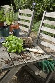 Closeup of plant with gardening tools and soil on chair