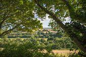 Summer Landscape Framed By Trees
