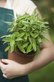 Closeup midsection of a woman holding potted plant