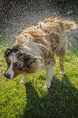 Dog Splash Out Water