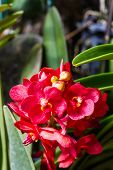 Beautiful Red Orchid Flowers
