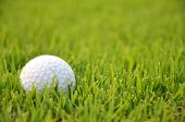 picture of dimples  - Dirty golf ball on the grass with green background - JPG