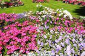 Flowerbeds in Abbey Gardens, Evesham.