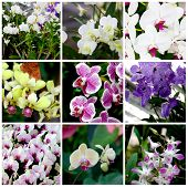 foto of tropical plants  - Set of backgrounds from tropical plants and flowers photos  - JPG