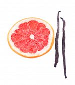 Dried grapefruit with vanilla beans isolated on white