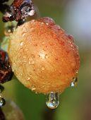Wet Grape.