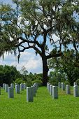 Miltary Graves Under an Oak Tree