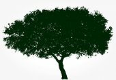 vector black wide tree