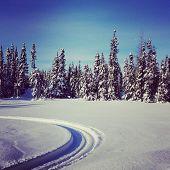 Scenic Instagram Of Snowmobile Tracks In Snow