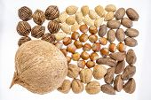variety of nuts (coconut, pecan, almond, black and English walnuts, hazelnuts, and Brazilian nuts)) on a white background