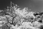 Infrared Desert
