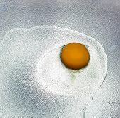 Yolk Of Crude Egg