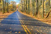 Asphalt road into autumn forest - Shenandoah National Park, Virginia - USA