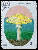 Toadstool Fly Agaric