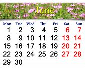 Calendar to June Of 2015 Year With Wild Carnation