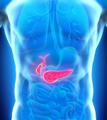 pic of esophagus  - Human Gallbladder and Pancreas Anatomy Illustration - JPG