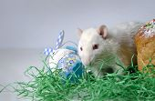 image of rats  - Cute little decorative rat near the Easter cake.