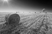 picture of haystack  - Cylindrical haystacks of straw scattered on the field after harvest as opposed to sun and a lonely tree in the background - JPG