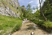 picture of ravines  - The Homole Ravine in Pieniny mountains Poland