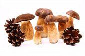 ocomus mushrooms