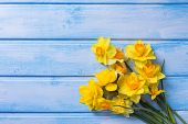 image of daffodils  - Bright yellow daffodils flowers on blue painted wooden planks - JPG