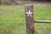 foto of texas star  - A selective focus view of a grungy white star on a wooden fence post in Texas - JPG