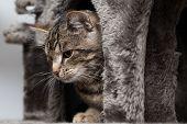 pic of tabby-cat  - Tabby cat at close - JPG