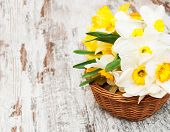 foto of daffodils  - Basket with daffodils on a old wooden background - JPG
