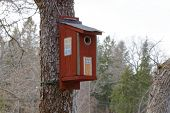 image of tree house  - Bird house in a tree painted as a traditional country house - JPG