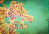 stock photo of sun flare  - Spring sakura blossom vintage background - JPG