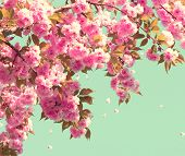 stock photo of sun flare  - Spring blossom background - JPG