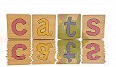 Wooden Tiles - Spelling Cats