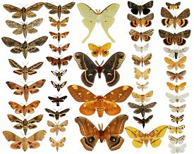 stock photo of moth  - Collection of Moths Butterflies  - JPG