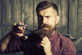image of long beard  - Portrait of unshaven man in violet checkered shirt cutting long beard and handlebar moustache with scissors making new style looking forward standing on wooden wall background horizontal picture - JPG
