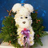Chrysanthemum Dog