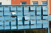 Damaged Mailboxes
