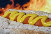 Hot Dog With Red Sausage Meat And Mustard