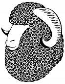 Portrait Of A Merino Sheep.