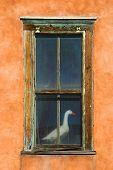 Goose In Window