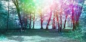 Magical Spiritual Woodland Energy Background poster