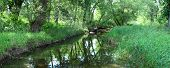 stock photo of winnebago  - A creek runs through the woodlands of northern Illinois - JPG