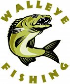 walleye Fishing fish