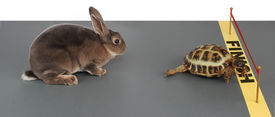 image of the hare tortoise  - turtle winning the race against a rabbit - JPG