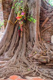 stock photo of parasite  - Parasite tree at Wat Khun Inthapramun public temple in Thailand - JPG