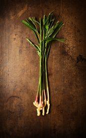 image of zingiber  - Fresh harvested ginger  - JPG