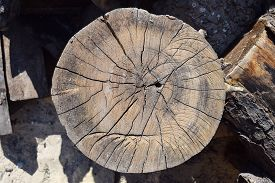 image of lumber  - Woodpile of cut Lumber for forestry industry - JPG